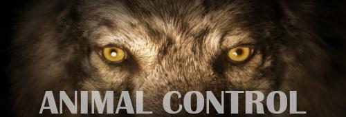 el paso animal control